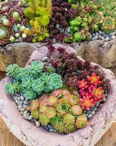plantes-grasses-extérieur-composition-nature-roche-succulentes