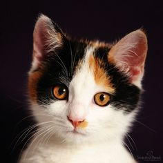 llbwwb:   Hello :) (via Portrait of a cat by Jacqueline / 500px)