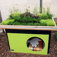 Green Dog House! - Utilize the space on top of your dog house for some flowers or vegetables. These will provide fantastic insulation in both the winter and summer!