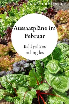 Aussaatpläne im Februar - Bald geht es richtig los - Haus und Beet Sowing plans in February. You can harvest fast-growing vegetables in spring. The slow growing vegetables will be harvestable in winte Container Gardening Vegetables, Planting Vegetables, Vegetable Gardening, Gardening For Beginners, Gardening Tips, Gardening Quotes, Flower Gardening, Plan Potager, Rotation Des Cultures