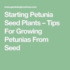 Starting Petunia Seed Plants – Tips For Growing Petunias From Seed