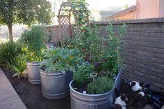 waist high container garden - Bing Images