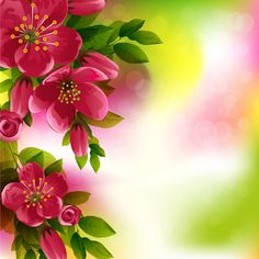 Beautiful red flower vector background 08