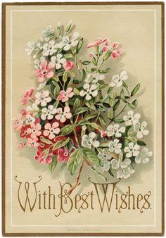 109 best vintage cards most printable for free images on pinterest old design shop free digital image vintage marcus ward co floral greeting card m4hsunfo