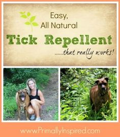 Easy, Natural Tick Repellent That Really Works Natural Tick Repellent - rose geranium oil - for humans and dogs Tick Repellent For Humans, Natural Tick Repellent, Dog Tick Repellant, Essential Oil Tick Repellant, Insect Repellent, Rose Geranium Tick Repellent, Mosquito Repellent For Dogs, Mosquito Spray, Rose Geranium Oil