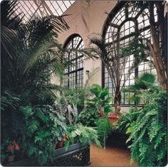 #Biltmore's Conservatory, a lush tropical retreat even on the coldest days.