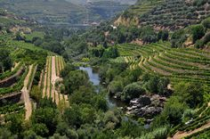 Rio Corgo is an influent stream into river Douro. It is found on the eastern end of Peso da Regua. Around the river you will find what you find almost everywhere in this Region, wine! It is here where the famous port wine is made.