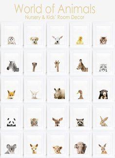 Kangaroo Nursery Animal Kids room Modern art Wall by WallArt2Decor