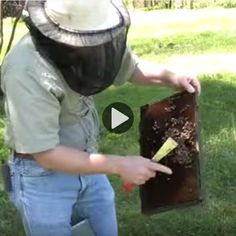 Maintaining New Bee Colonies (Video)