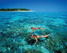 Snorkeling in the Great Barrier Reef- so jealous! I'd be so scared though!