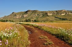 This photo from Free State, East is titled 'It's Cosmos Time'. Free State, Beautiful Places To Travel, Africa Travel, The Great Outdoors, Wonders Of The World, Landscape Photography, South Africa, Tourism, Scenery