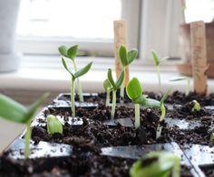 Forkultivering - sådan gør du, læs guiden her - Urban Garden Company Grow Your Own, Garden, Plants, Urban, Garten, Lawn And Garden, Flora, Gardening, Outdoor