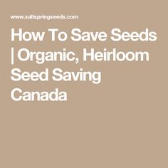 How To Save Seeds | Organic, Heirloom Seed Saving Canada