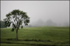 One by Marcie Scudder - single tree, growing strong, roots reaching down into the earth to build a solid foundation, limbs stretching up to the sky to grow. Beautiful