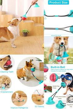 🐶 BENEFITS: dog games for dog brain games. Interactive toys for dogs and puzzle for dogs. dog chew toys. It does no harm to your dogs but also helps prevent your dogs from bad breath and periodontitis caused by poor oral hygiene, and easy to clean. It can also entertain your dogs for a very long time! Dog Treat Toys, Dog Chew Toys, Brain Games For Dogs, Dog Games, Dog Puzzles, Puzzle Toys, Dog Feeding Bowls, Dog Bowls, Dog Toys For Boredom