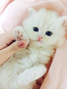 Sweet Kitten ~