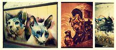 ARTE URBANO: graffitis de gatos esfinge y perros del submundo o erosionados por el tiempo