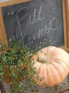 A http://www,splashtablet.com rePin. harvest, chalkboard, pumpkin Splashtablet iPad Cases - the perfect case for garden, pond work, beach & pool - waterproof under $45 5-Stars