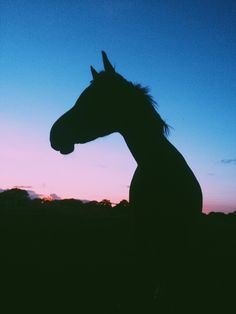 Beautiful horse in sunset!