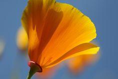 Wildflower Favorites - Cameron Kennedy
