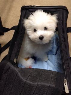 Let's go!  OMG!  Cuteness overload!