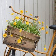 Wat een druilerige dag hè?! Zelfs zo donker dat een foto binnen niet lukte... dan maar een oudje van mijn fiets! En oooh ik kan niet wachten op de dag dat ik hem weer buiten kan zetten mèt mooie bloemen in het kistje... nog één maandje geduld??!  #fiets #bicycle #flowers #flowersofinstagram #yellow