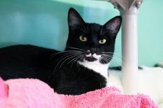 Update : Adopted :-) Raven has been adopted from the Seattle Humane Society