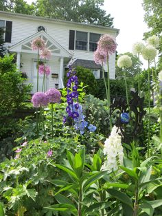 Alium, Foxgloves, Delphinium. I want these in my future garden!