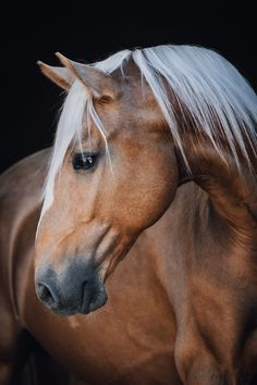 Photos: Horses in Nature I Anna Ibelshäuser - Photos: Horses in Nature I Anna Ibelshäuser - Cute Horse Pictures, Beautiful Horse Pictures, Most Beautiful Horses, Horse Photos, Animals Beautiful, Horses And Dogs, Cute Horses, Pretty Horses, Horse Love