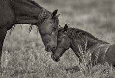 wild horses utah--12