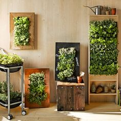 Copper-framed, chalkboard, or freestanding gardens! (WS) Tilted slots for plants, like hardware organizer, w/irrigation tubes.  Bring your wall to life with a stunning vertical herb garden. This planter mounts securely to the wall and offers a unique, space-saving way to harvest fresh herbs while adding lush greenery to your kitchen or an outdoor area. Just fill the cells with the herb of your choice, and water as needed through the top irrigator; the hidden collector tray catches excess…