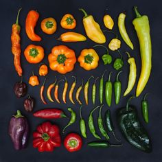 Vibrant Food Compostions