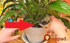 How to feed indoor plants? Homemade Balsamic Dressing, Bolet, Red Bouquet Wedding, Amazing Red, Felt Birds, Houseplants, Indoor Plants, Garden Design, Planter Pots
