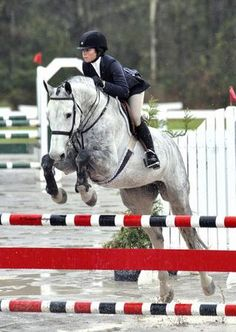 Cyrus - Top Eq Horse COMMISSIO - Holsteiner - Equitation horse for sale on Bigeq.com