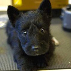Puppy Fluffy.