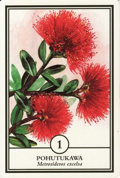 First Light Flower Essences with Franchelle  No 1 Pohutukawa  Pohutukawa Deva's Blessing  I bring the gift of initiative –   an inner vibrancy that permeates the being.  Through me you expereience the spark of life;  The heartbeat and the pulse of the land.  Pohutukawa is a true New Zealand icon.