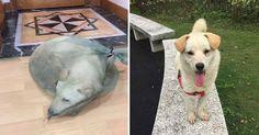 El padre de Danielle se encuentra actualmente en China y allí encontró a unas personas que estaban vendiendo perros para consumir su carne.