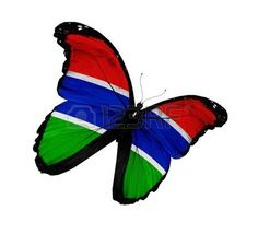butterfly background: Gambia flag butterfly flying, isolated on white background Stock Photo
