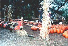 Pettit Creek Farms in Cartersville, Georgia.