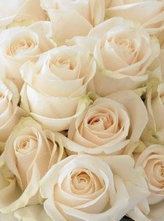 White Garden Rose vitality rose after years of searching for a fragrant white garden