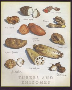 Tubers and Rhizomes Cooks Illustrated Cooking For A Group, Cooking For Two, Cooking Chef, Vegetarian Cooking, Easy Cooking, Cooking Recipes, Cooking Hacks, Italian Cooking, Cooking Videos