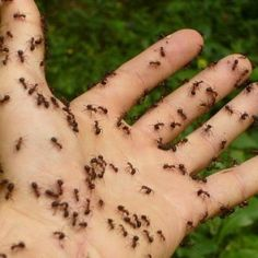How You Can Control Hummingbird Feeder Pests Such as Ants, Bees and Wasps Best Pest Control, Bug Control, Types Of Bugs, Get Rid Of Ants, Household Pests, Bees And Wasps, Pest Management, Humming Bird Feeders, Garden Guide