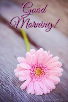 Good Morning Picture, Good Morning Good Night, Morning Pictures, Good Morning Wishes, Good Morning Images, Good Day, Just Saying Hi, Blessed Quotes, Morning Greeting