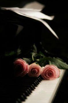 pink rose w/ piano http://pinterest.com/cameronpiano