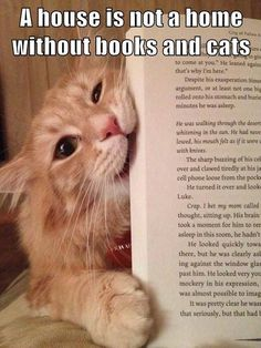These 15 Kitties Think They Make the Purrrrfect Bookmark! - Page 3 of 4 - All About Cats I Love Cats, Cute Cats, Funny Cats, Animals And Pets, Funny Animals, Cute Animals, Crazy Cat Lady, Crazy Cats, Chat Maine Coon
