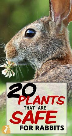 Rabbit Diet, Rabbit Eating, Pet Rabbit, Rabbit Toys, Pet Guinea Pigs, Guinea Pig Care, Sugar Glider Baby, Common Garden Plants, Rabbit Facts