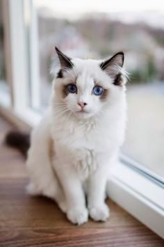 Top 5 Best Cat Breeds