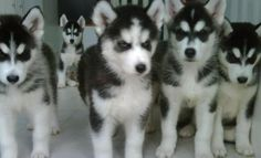 KAIRI CLONES!  ... But for real.. I think that's my dog in the back doing the creepin'.