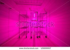 Tissue Culture Lab growth room, using pink blue LED growth lights - stock photo