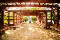 Fullerton Arboretum Wedding Engagement Photography Orange County Photographer-22